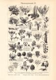 Pflanzensystematik III. - IV. historischer Druck...