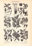 Parfümeriepflanzen I. + II. historischer Druck...