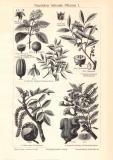 Nutzhölzer liefernde Pflanzen I. - II. historischer...
