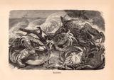 Krabben Stich Original der Zeit