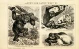Der Holzstich aus dem Jahr 1891 zeigt auf Vorder- und...
